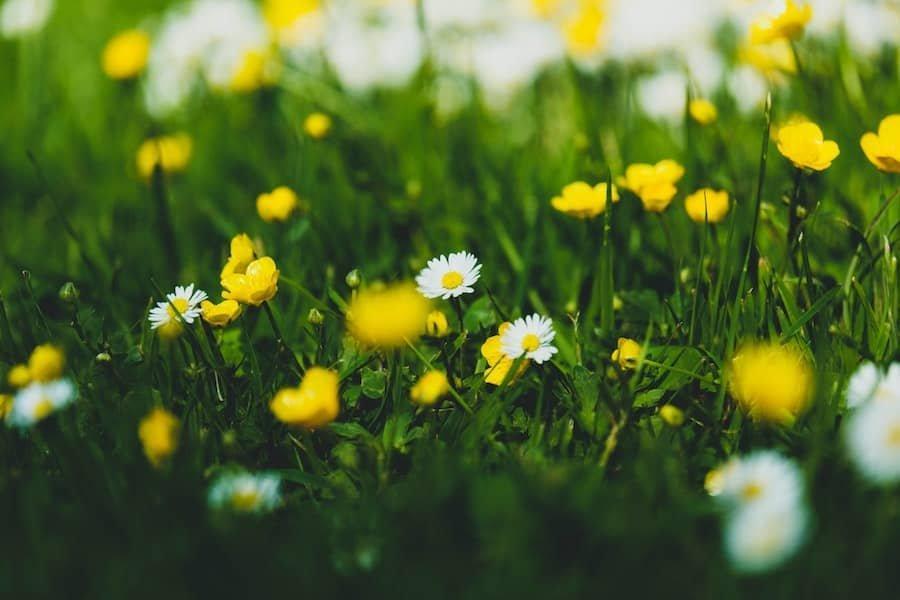 Flores_día_de_la_madre