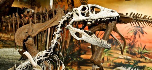 Museo_dinosaurios_Comunitat_Valenciana